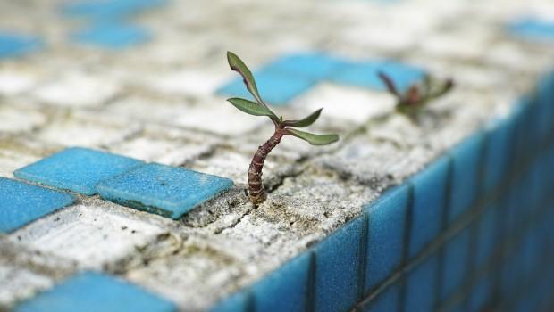 plant-2318936_1280